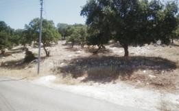 ارض للبيع في ابو السوس 687م - القرية البحاث حوض 6 الدبة
